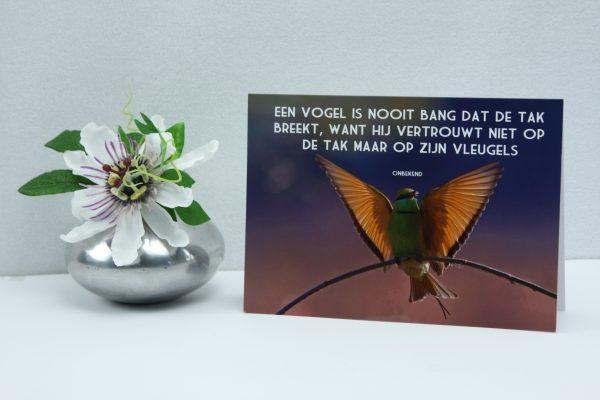 Een vogel is nooit bang dat de tak breekt