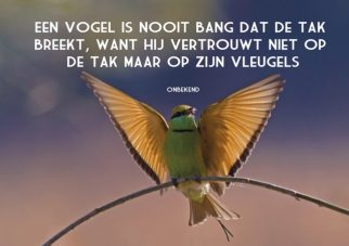 Een vogel is nooit bang; Foto: Deepak Sancat/Green Beeter landing