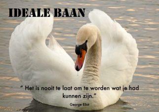 Ideale baan; Foto: Mute Swan by Nottsexminer