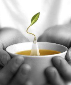 Tea Forté: luxe thee en presentatie