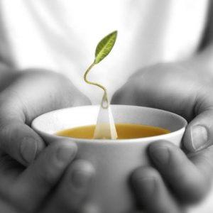 Tea Forté: Exclusief theeservies voor buitengewone thee